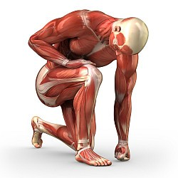 Botten, Spieren en Gewrichten width=